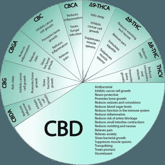 cannabinoids-CBD